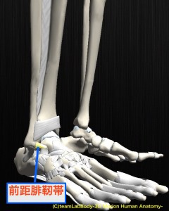 前距腓靭帯