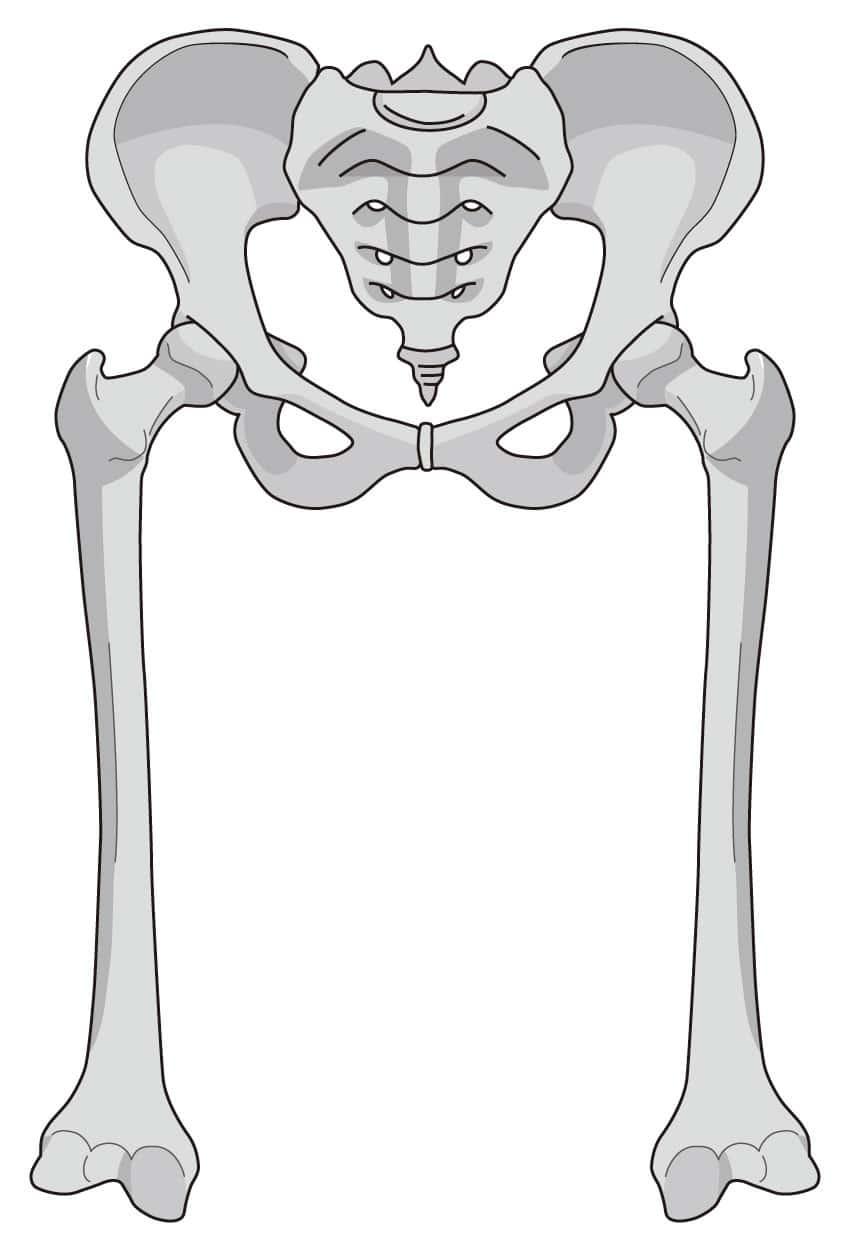 理学療法士が股関節外旋筋の効果的なトレーニング方法を解説!知っていますか?