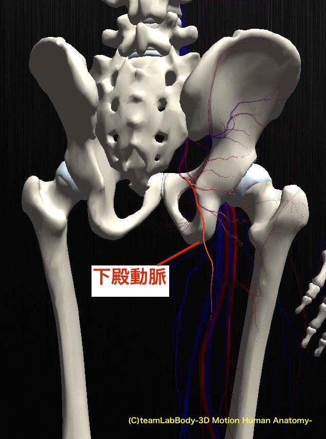 股関節の関節唇の役割とは?解剖についてもご紹介します!
