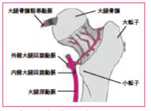 股関節 血流