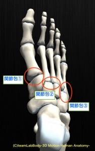 関節包 足