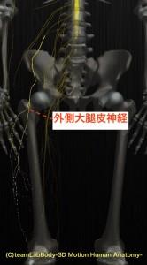 外側大腿皮神経