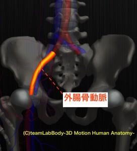 外腸骨動脈
