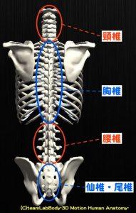 脊椎-min