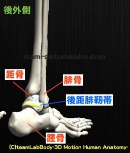後距腓靭帯