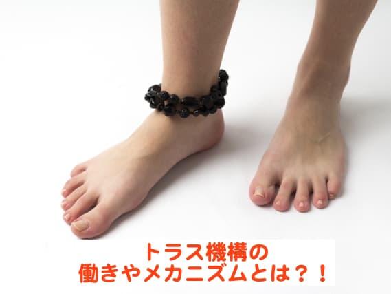 トラス機構と足部のアーチとの関係やメカニズムとは?!ウィンドラス機構との違いもご紹介!【理学療法】
